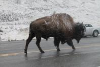 Yellowstone 2014 105